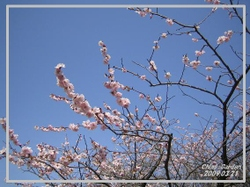 Kairakuenn_ume_03_20090323