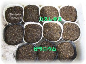 Kosuretasu_20090415