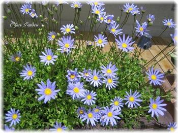 Bluedeiji_20090522