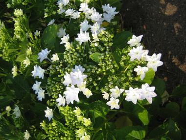 Flowercenter_2_20090617