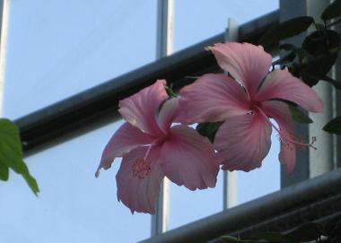 Flowercenter_4_20090617