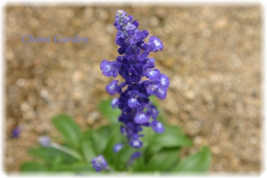 Bluesarubia_20090709