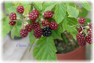 Blackberry_20090714